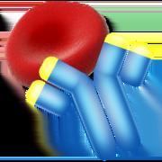 test direct à antiglobuline